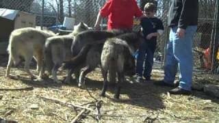 wolf creek habitat and rescue the johnsons visit