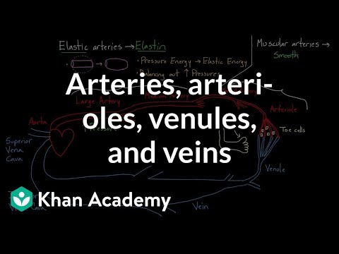 Arteries, Arterioles, Venules, And Veins | Health & Medicine | Khan Academy