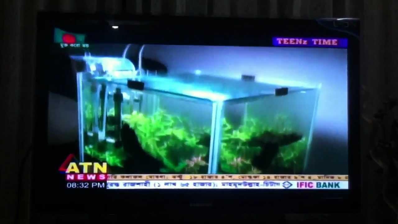Fish aquarium in bangladesh - Interview On Planted Aquarium Bangladesh Aquarists 2016 11 03