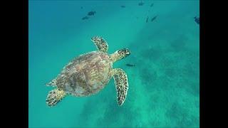 Waikiki Catamaran Sailing & Snorkeling
