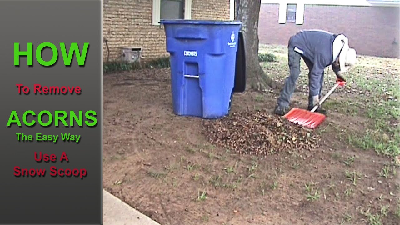 How To Clean Up Acorns