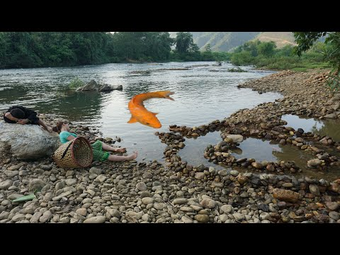 Survival skills | Build a fish trap _ Stack stones create a maze fish trap _ Catch lots of big fish