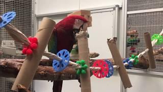 Bird Show BTS: Cardboard Tube Enrichment