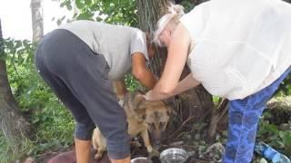 Стеклом перерезали веревку, затянутую на шее собаки, в Бердске