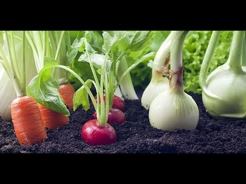 How to Grow a Vegetable Garden from Kitchen Waste  Regrow Again and Again