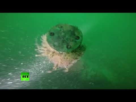 Nearly 100 years underwater: German WWI submarine identified off Belgian coast