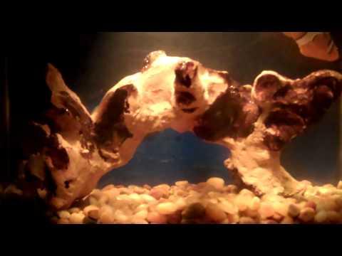 Robo Fish For The Fish Tank