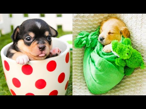 Baby Dogs – Cute and Funny Dog Videos Compilation #38 | Aww Animals