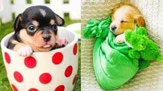 Baby Dogs  Cute and Funny Dog Videos Compilation #38 | Aww Animals