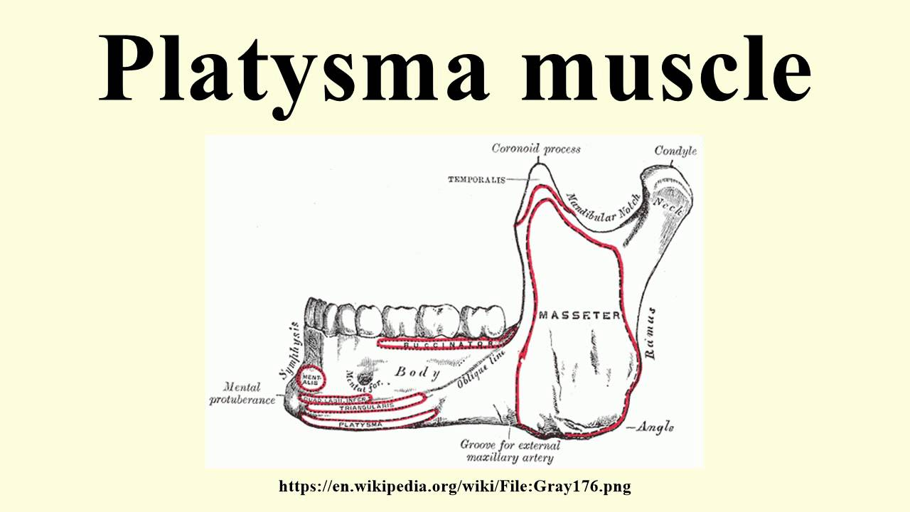 Platysma Muscle Youtube