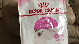 Ragdoll Kitten to cat Из котенка в кошку рэгдолл Видео о сухом корме и консервах для котов и котят