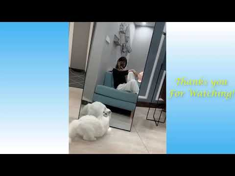 Cute Dogs and Cats video