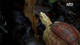 Во Вьетнаме пытаются спасти исчезающие виды черепах