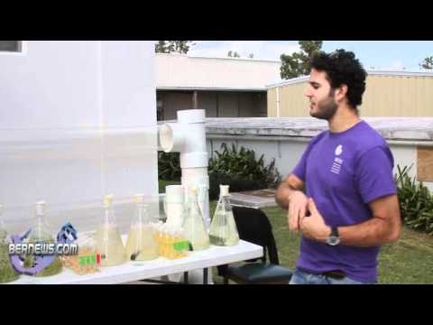 Generating Biofuel From the Sargasso