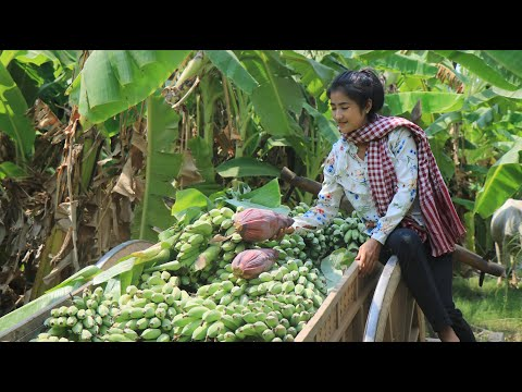 Find Banana Flowers For My Recipe / Banana Flower Recipe / Prepare By Countryside Life TV.