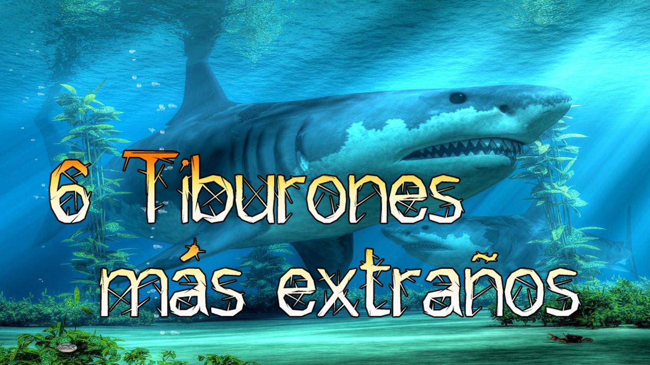 6 Tiburones Prehistóricos Más Extraños Del Planeta