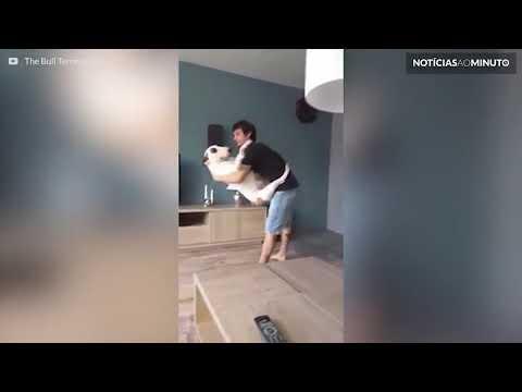Notícias ao Minuto Brasil   A dança romântica entre um cão e o seu dono