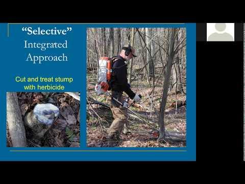 Regenerating Hardood Forests: Managing Competition, Deer and Light