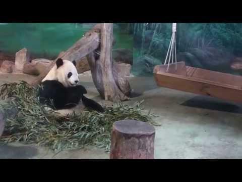 Taipei Travel Vlog: Taipei Zoo - Giant Panda House