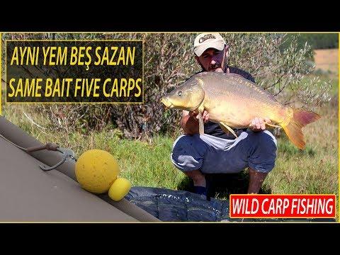 *** SAME BOILI +FIVE CARP FISH ***
