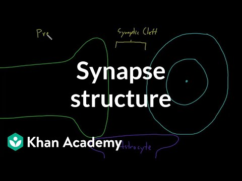 Synapse structure | Nervous system physiology | NCLEX-RN | Khan Academy