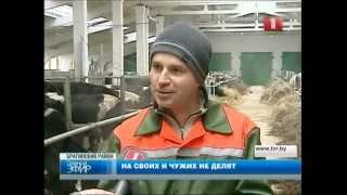Беларусь - приют для украинцев