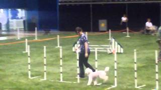 Poodle Club Of America-jumpers