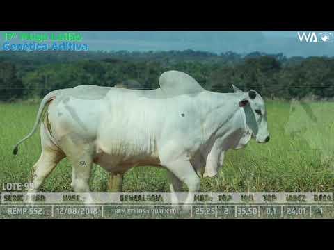 LOTE 95 - DUPLO -  REMC A 2303, REMP 552 - 17º Mega Leilão Genética Aditiva 2020