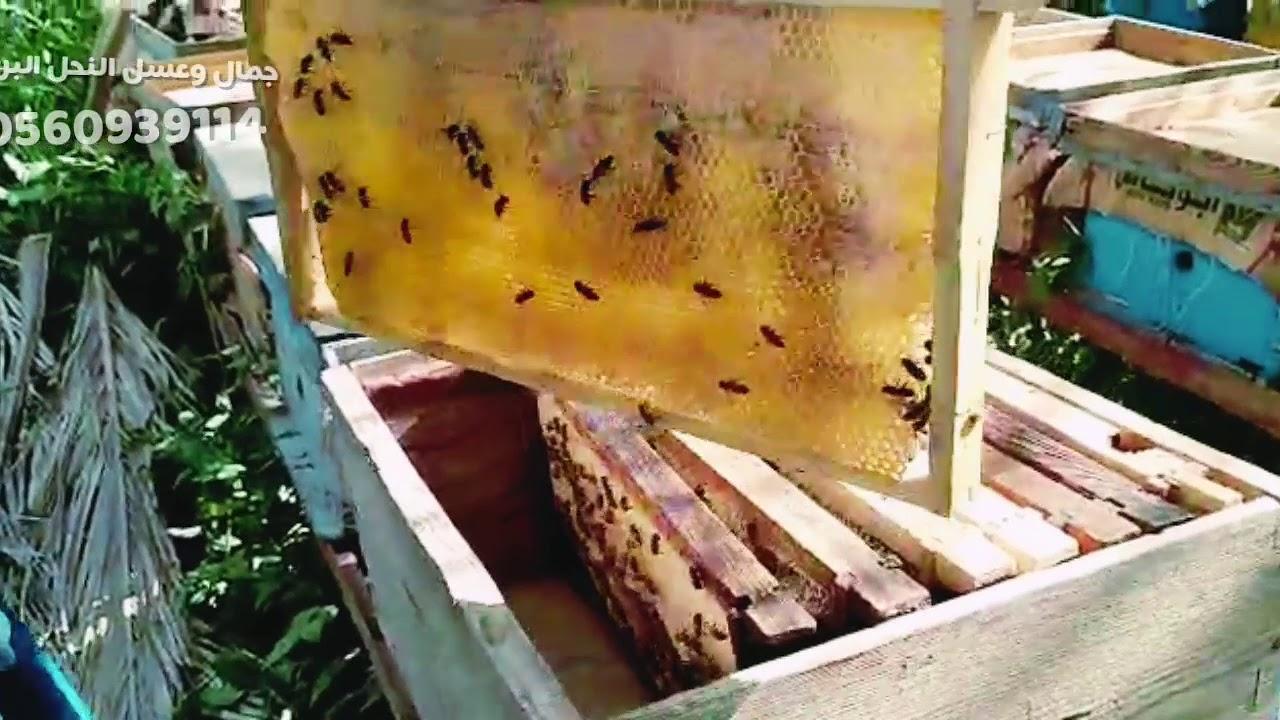 فرز العسل من البدايه تعرف على لون العسل المميز