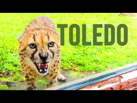 Explore 419 for April in Toledo, OH