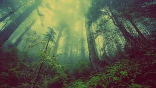 David Milles - Paradise (Original Mix) Techno, Minimal Music