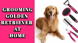 Golden retriever grooming at home