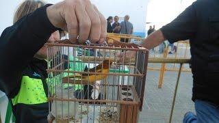 VII concurso elsilvestrismo com -2º- Aznalcollar 2015 pepegranada