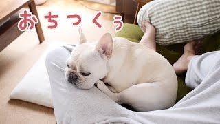 French bulldog Koume San Favorite spot(Summer) お気に入りの場所に...