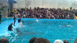 Аквапарк Нэмо в Харькове(Представление в аквапарке., 2013-02-24T13:43:46.000Z)