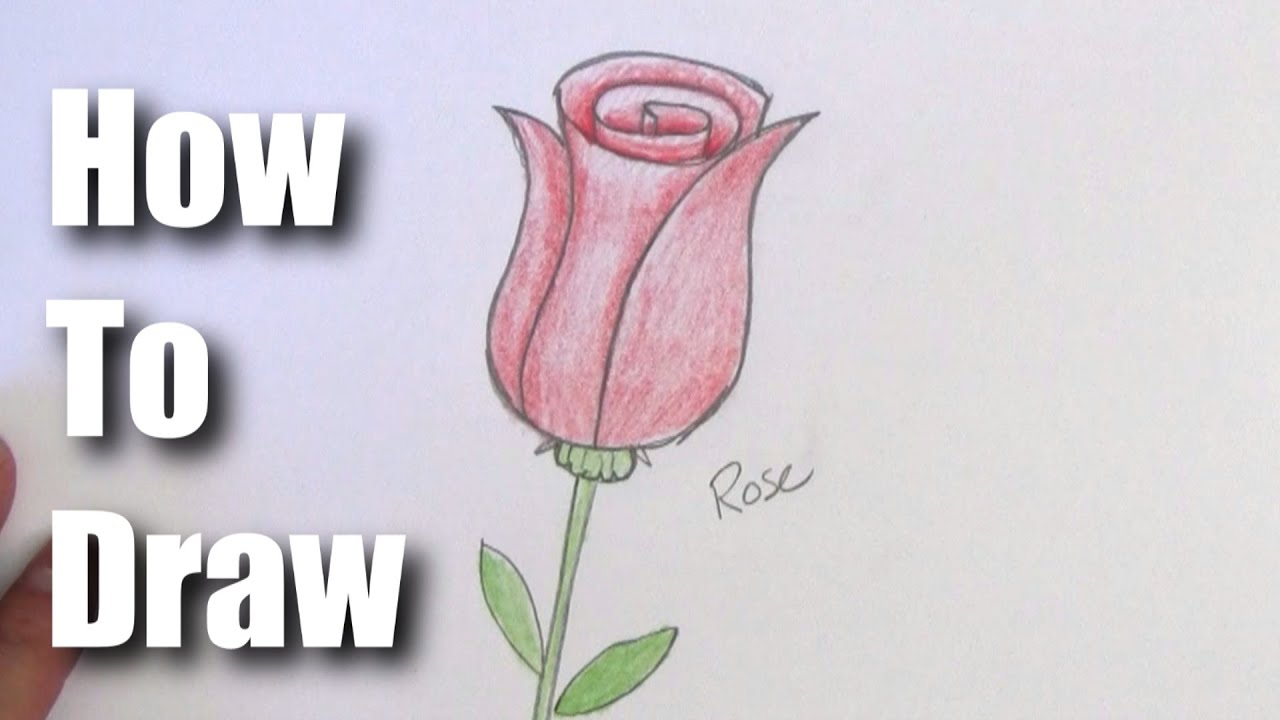 How To Draw A Rose Easy Step by Step For Beginners YouTube