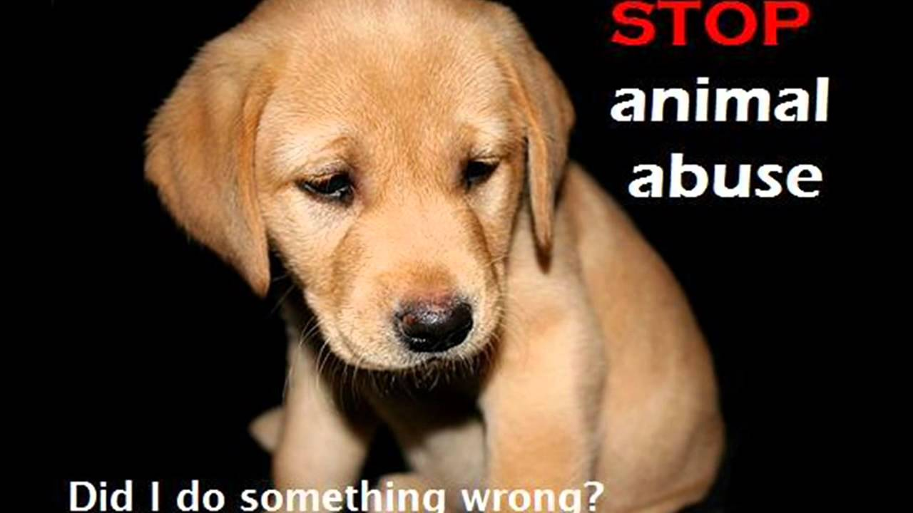 animal cruelty why beat innocent Environment secretary michael gove has announced that animal  when a man  bought a number of puppies just to brutally and systematically beat,  fit the  crime and so many innocent animals will benefit from their actions.