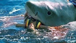 top 5 shark attacks caught on camera   themysteryseeker