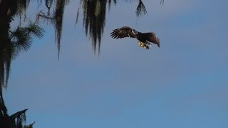 swfl eagles e9 s 2 week birthday m brings food rails h watches for guests 01 14 17