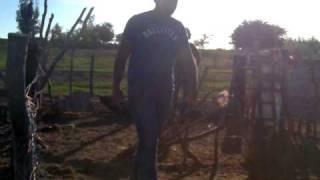 borregos saltarines cohuibampo