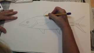 How to Draw a Fish the Easy Way - Spanish Mackerel