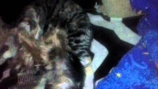 Кошка любит собаку