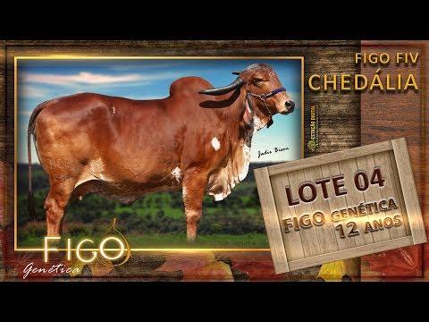 LOTE 04 - FIGO FIV CHEDÁLIA - HCFG 287