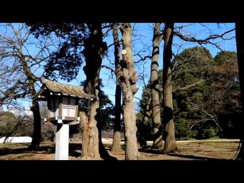 Day 21   Harajuku, Yoyogi Park, Takshita St, Meiji Shrine and a quiet night