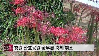 창원 산호공원 꽃무릇 …