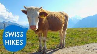 Hiking in Switzerland // Jungfrau Region //