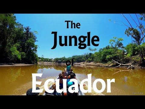 The Jungle of Ecuador - Ecuador chapter l  HD