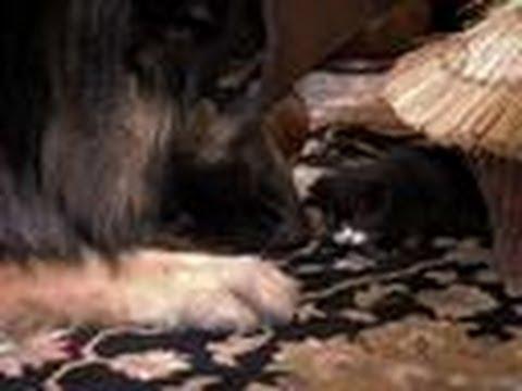 Kitten looks for New Mom | Too Cute!