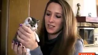 Wie Müll weggeschmissen: Familie zieht ausgesetzte Katzenbabys groß - Niederkaufungen