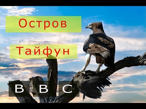 BBC  ДИКАЯ ПРИРОДА Остров тайфунов - Ржачные видео приколы